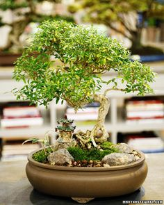 My bonsai is dying. It's on my windowsill, where it receives plenty of light. What can I do?