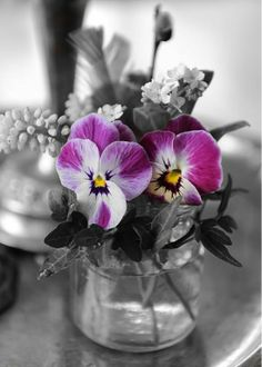 splash of color / photography / pansies / purple