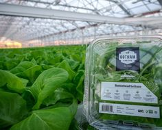 So Fresh & So Green Green Showing off our new lettuce packaging at our newest rooftop greenhouse in #NYC. by gothamgreens