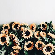 Flower Power || Dixie & Dot