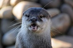 Otter looks like he can't believe what he's seeing - February 23, 2013