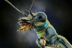 insetto 11