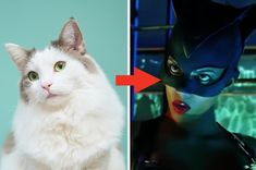 Kitten = Catwoman!View Entire Post ›