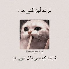 Special Love Quotes, Baby Love Quotes, Love Quotes Poetry, Love Poetry Urdu, Emotional Poetry, Poetry Feelings, Very Funny Jokes, Crazy Funny Memes, Funny Quotes