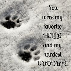 Ideas for rip pet quotes cat rainbow bridge Pet Quotes Cat, Animal Quotes, Loss Of Cat Quotes, Lost Dog Quotes, Quotes About Dogs, Pet Memes, I Love Dogs, Puppy Love, Cute Dogs