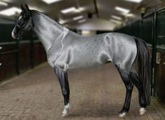 Akhal Teke horse with silver buckskin coat. An ancient breed of horse, the Akhal-Teke is the national symbol of Turkmenistan. The Akhal-Teke is native to Turkmenistan, a republic in central Asia. Most Beautiful Horses, All The Pretty Horses, Beautiful Arabian Horses, Horse Photos, Horse Pictures, Beautiful Creatures, Animals Beautiful, Animals And Pets, Cute Animals