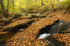 Susquehanna State Park, Harford County, Maryland