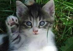 High five !!