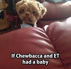 Wenn Chewbacca und E.T. ein Kind hätten