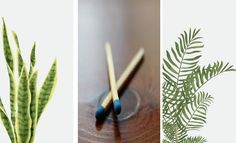 Incense, Gardening, Lawn And Garden, Horticulture