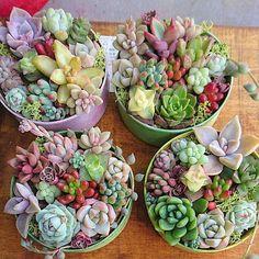 Succulents.