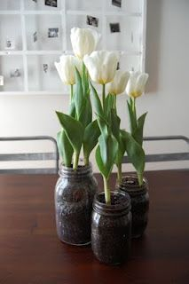 force individual bulbs in separate containers, make different groups (or give as gifts)