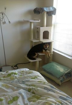 (And hey, at least you're not this dog.) | 28 Cats Who Have No Idea How They Ended Up Here