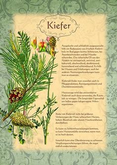 "# Kiefer More on ""health"" is on interesting-thing . Herb Garden Pallet, Diy Herb Garden, Pallets Garden, Garden Plants, Healing Herbs, Medicinal Plants, Natural Healing, All About Plants, Greenhouse Gardening"
