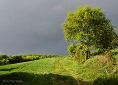 Sommer og regn | Tom`s side #sommer
