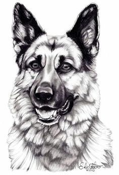 German Shepherd Dog by SofieWikstromArt on DeviantArt Marley our three year old German Shepherd is an amazing SAR working dog and the sweetest little girl! (have to be honest I would not have said that two years ago) Animal Sketches, Animal Drawings, Pencil Drawings, Dog Pencil Drawing, Yorkshire Terrier Puppies, German Shepherd Dogs, German Shepherds, German Shepherd Painting, German Shepherd Tattoo