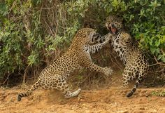 Best Wild Nature Photos of The Year 2013 | FreeYork