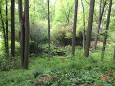 Looking down into the zen Buddhist garden oasis