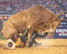 PBR - Frank Newsom bull fighter. sometimes the bulls get you! Sometimes you get the bulls...but not often.