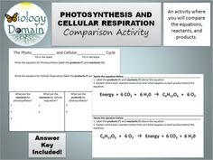 Photosynthesis and Cellular Respiration: Comparison with Answer Key Photosynthesis And Cellular Respiration, Game Ideas, Worksheets, Student, Key, Activities, Play Ideas, Unique Key, Literacy Centers