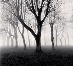 Michael Kenna Photography   -  Mysterious Forest... FRANCE.
