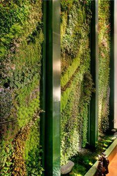 mur vegetal, patrick blanc, gruene wand, KulturKaufhaus Berlin, Dussmann