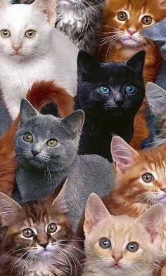 Crazy Cat Lady Wallpaper