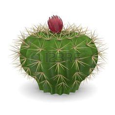 Cactus Flower Parodia Mutabilis In Pot On Black Stock Photo ...