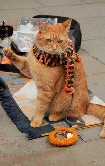 Bob (a Londoner street cat)