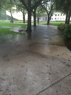 FIUsm | 'Storm Ready' campus floods after rainfall | | FIUsm
