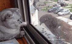 Gif cat