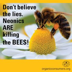Three big lies pesticide-makers are planting in the media, to make you think pesticides aren't killing pollinators. Learn more: http://orgcns.org/1CtcVQ2  Help spread the truth by sharing this pin! #SaveTheBees #SaveOurPollinators
