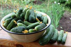 Йод и зеленка увеличат урожай и спасут от болезней