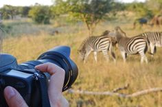 Travoge Safari experts recommends best safari cameras for Africa- whether you are beginner or advanced, looking for a good deal or a bundle. Game Lodge, Safari Adventure, Game Reserve, Wildlife Conservation, African Safari, Greatest Adventure, Wildlife Photography, Habitats, South Africa