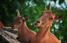 Untitled by tichon #animals #animal #pet #pets #animales #animallovers #photooftheday #amazing #picoftheday