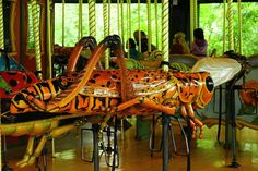 Carousel - Bronx Zoo | Flickr                                                                                                                                                      More