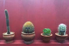 Frida Kahlo: Art, Garden, Life in the New York Botanical Garden | Cacti Lineup | FATHOM