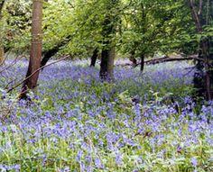 Kempston Rural Walk (Kempston Wood)