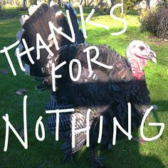A bad day for turkeys a delicious day for Mankind. Thanks for nothing. Thanksgiving.