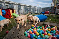 Guide dog school