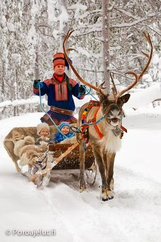 I am fairly obsessed with reindeer, even more so since I found out my great-grandfather's family were reindeer herders. :-) I am fairly obsessed with reindeer, even more so since I found out my great-grandfather's family were reindeer herders.