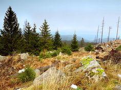 Geocaching im Harz