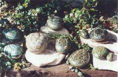 Frog rocks!
