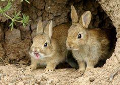 bunny hole