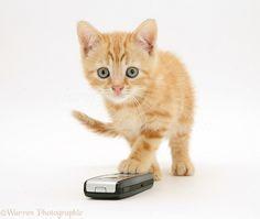 Mobile Phone Phone -                                1246 x 1052 · 171 kB · jpeg, Kitten On Phone                         720 x 1280 · 112 kB · jpeg, Samsung Galaxy Mobile Wallpapers                         989 x 1755 · 521 kB ·