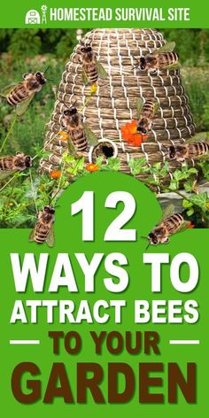 Gardening For Beginners There are many steps gardeners can take to help increase the food supply for bees and improve their habitat. Most of these are not only easy to do, but they will bring benefits to your garden as well. Homestead Survival, Survival Tips, Homestead Farm, Survival Quotes, Outdoor Survival, Survival Skills, Raising Bees, Bee Friendly, Organic Gardening Tips