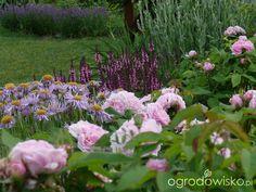 Ogród prawie romantyczny - strona 480 - Forum ogrodnicze - Ogrodowisko