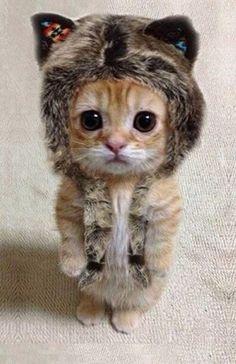 Funny: Cute animal pics {Part 159} (20 photos) - - Xaxor