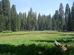 sequoia national park | File:Sequoia National Park - Round Meadow.JPG - Wikimedia Commons