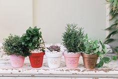Cupid's Corner: DIY Potted Plant Valentines